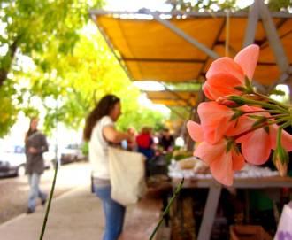 MAR DEL PLATA (Green Market), ARGENTINA