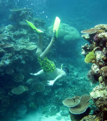 [ Great Barrier Reef, CAIRNS, QLD, Australia ]