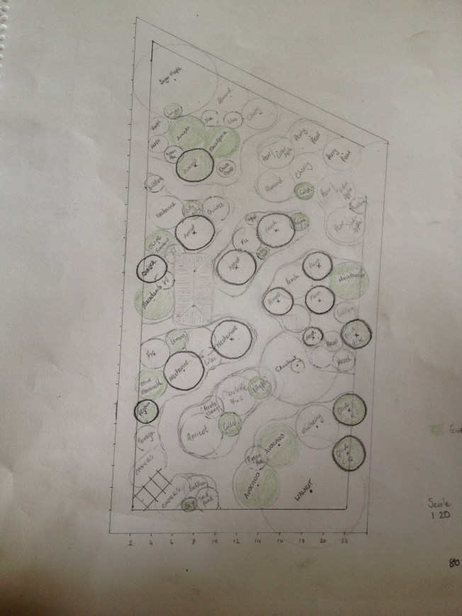 The Hand-drawn plan of our Food Forest Project