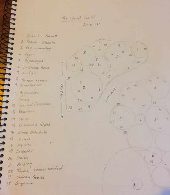 My hand sketch of the 'Island Guild' plantings.