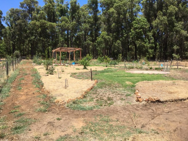 The food forest progressing Jan 2017
