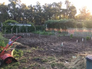 The vegie patch renovation