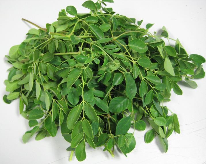 نبات المورينجا فوائد طبية لا تحصى فيديو ويكي عربي
