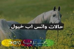 حالات واتس اب خيول , كلام عن الخيل , رمزيت واتس اب خيول 2018 , اجمل ما قيل عن الحصان
