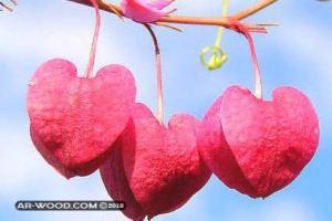 ما الفرق بين نظرات الاعجاب والحب