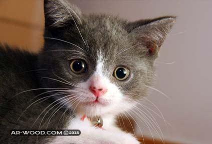 ماذا تاكل القطط في عمر الشهر