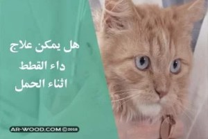 هل يمكن علاج داء القطط اثناء الحمل 2018