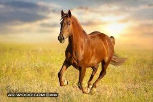 رؤية الحصان في المنام للعزباء