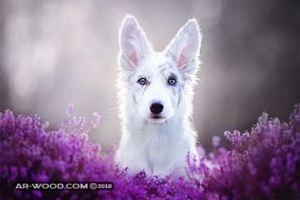 احسن انواع الكلاب فى العالم