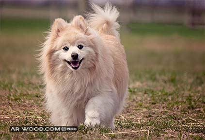 انواع الكلاب الصغيرة واسعارها فى مصر