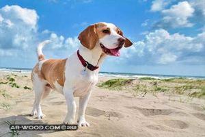 انواع الكلاب واسمائها واسعارها في مصر