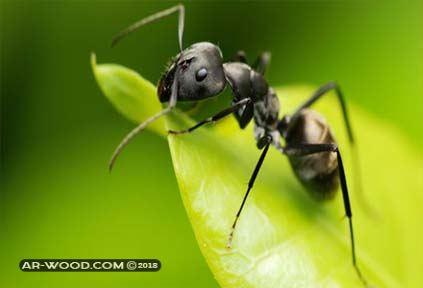 تفسير حلم النمل على الجسم لابن سيرين