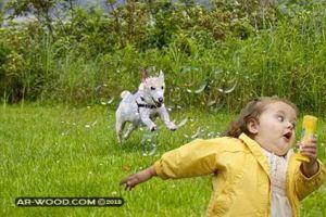 تفسير حلم الهروب من الكلاب لابن سيرين