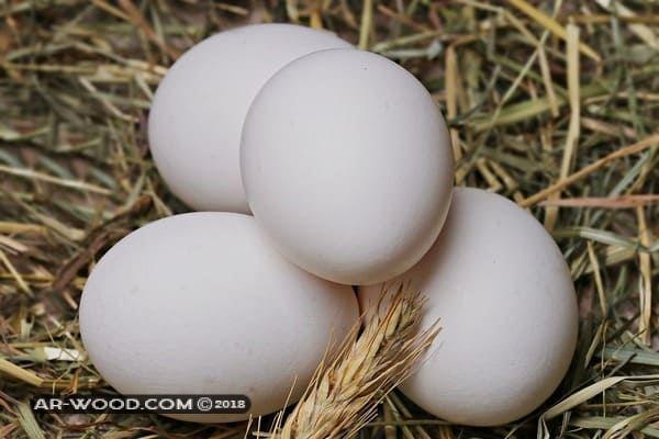 رؤية البيض في المنام للبنت المتزوجة
