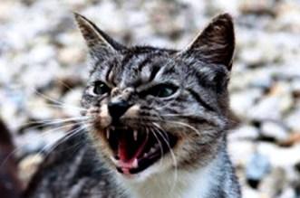 عضة قط تودي بحياة طفل في تارودانت