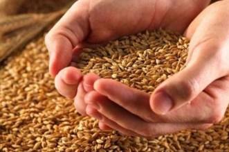 """لسدّ """"الخصاص""""..  المغرب يعتزم استيراد القمح من أمريكا"""