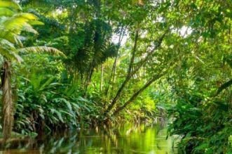 حرائق الأمازون تهدّد الأرض.. إنذار بكارثة بعد احتراق 20% من مصدر الأوكسجين