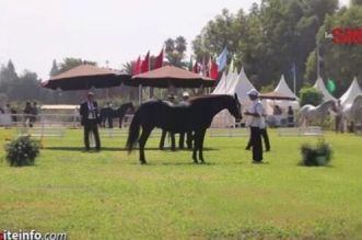 مكناس تحتضن منافسات النسخة الثالثة للملتقي الوطني للحصان البربري والعربي البربري -فيديو