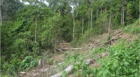 قطع الأشجار الغير المشروع لغابات أبوسان أمر الموت للحيوانات النادرة