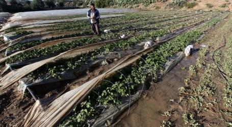 الزراعة الفلسطينية : مزارعو غزة يخسرون بـ م1.25 مليون دولار من المبيدات الإسرائيلية السامة