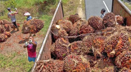جمعية زيت النخيل الإندونيسية : قطاع زيت النخيل يحتاج إلى استراتيجية لمواجهة التحدي الوبائي
