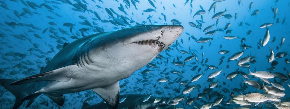 بيتكوين الحيتان