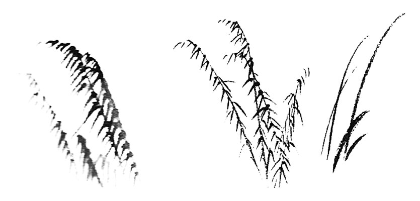 اللوحة الصينية : القصب
