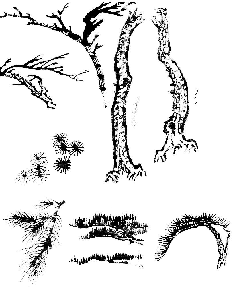 اللوحة الصينية : الصنوبر