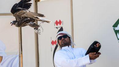 Photo of مشاركات كبيرة في فئات العامة والملاك من بطولة فخر الأجيال للصيد بالصقور
