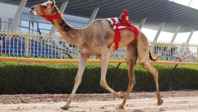 Photo of مكتوم بن حمدان يشهد تحديات تحديات الثنايا لهجن الشيوخ في مهرجان ولي عهد دبي