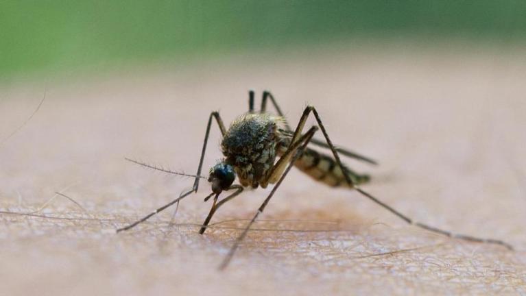 هل ينقل البعوض فيروس كورونا ؟ صحيفة ألمانية تجيب