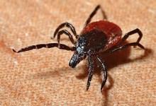 """صورة """"المقلد العظيم"""".. دراسة تحذر من جائحة جديدة تنتقل عبر لدغة الحشرات إلى البشر"""