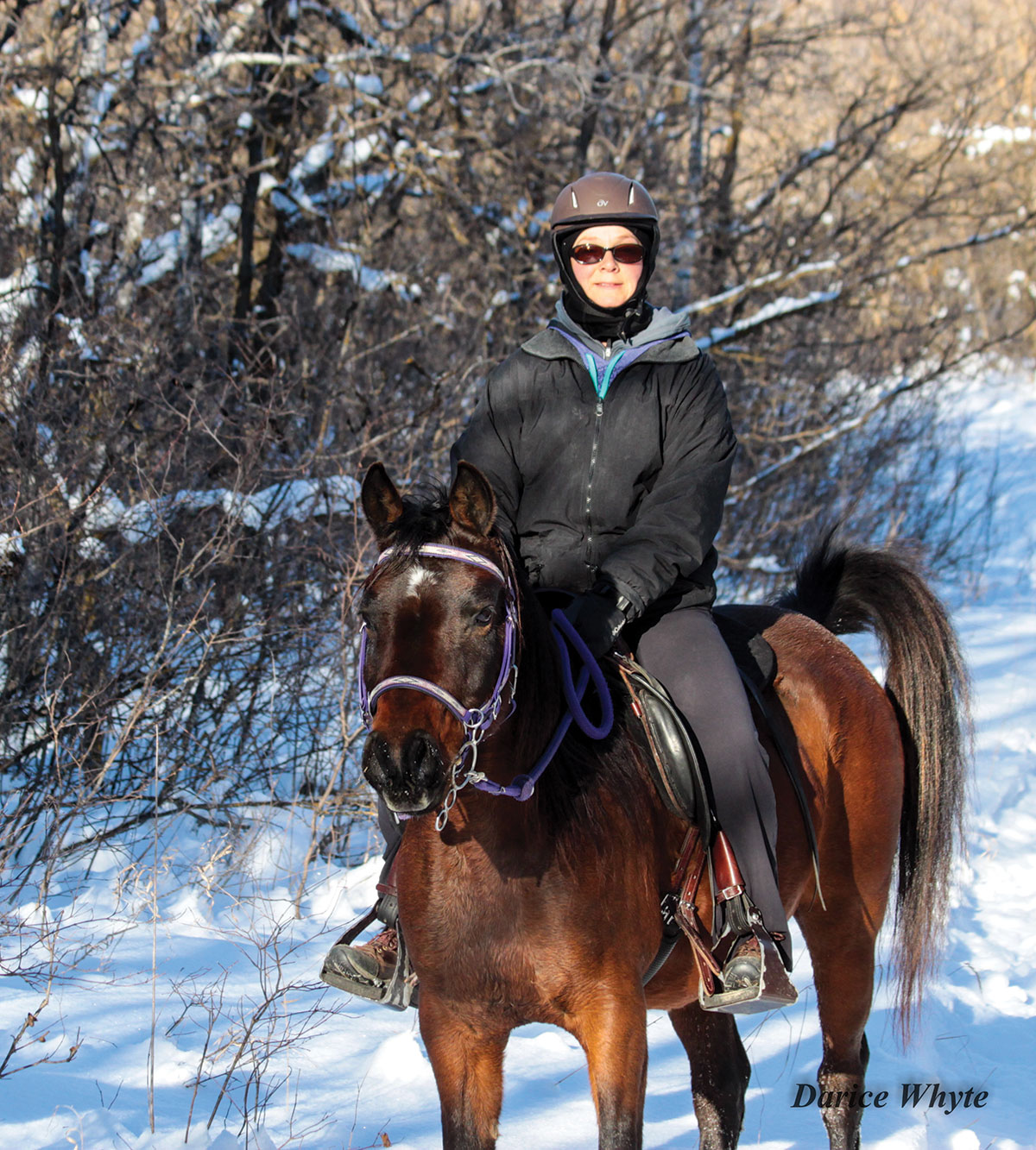 The Amusements of Winter Riding | Arabian Horse World - photo#47