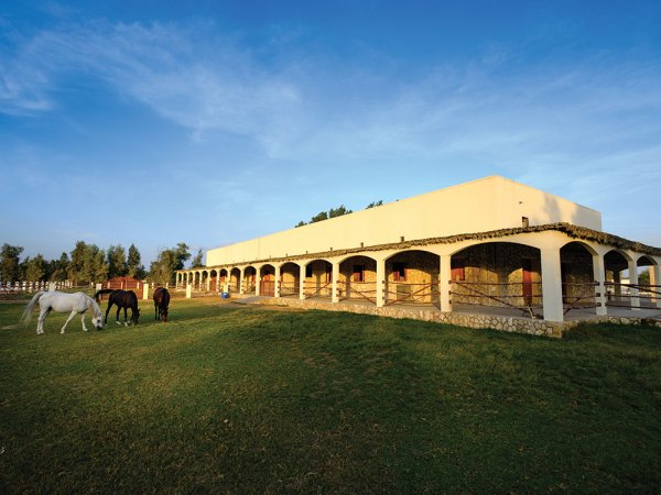 Al Jood Stud: Gateway to the Stars