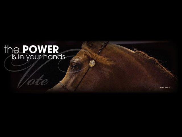 The 2018 Arabian Horse World Horse of the Year