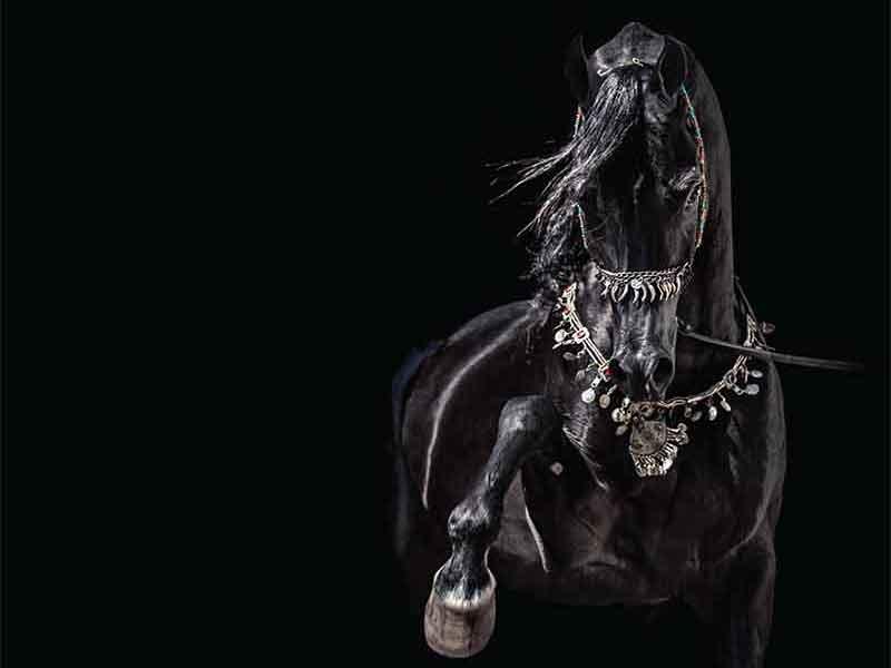Arabians Ltd.