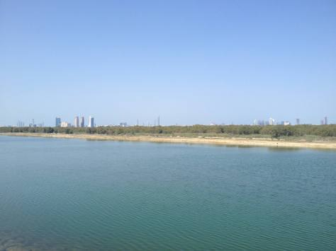 Mangroves view and the city in the distance