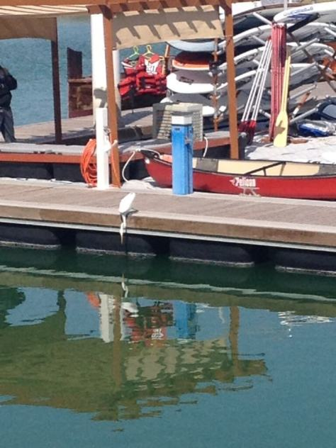 A stork fishes off the jetty at the promenade