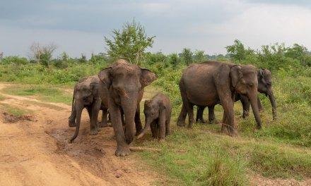 Sri Lanka: Shangri-La's Hambantota Golf Resort & Spa