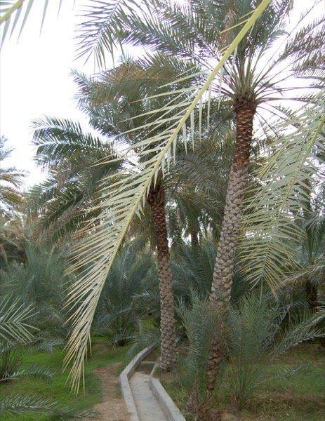 Things to do in Al Ain Arabian Notes January 2016 4