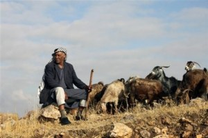 shepherd tends to his flock in Gaza, Palestine