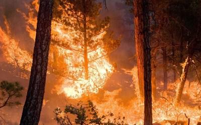 الرياح العاتية تعيد إشعال حرائق غابات في وسط البرتغال