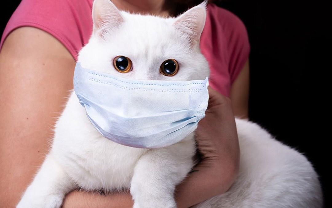 روسيا تسجل أول لقاح في العالم للحيوانات ضد فيروس كورونا