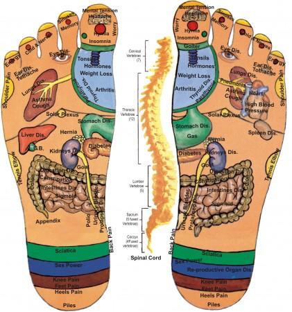 تعرف على خريطة الجسم من خلال باطن القدم تغريدة عربية