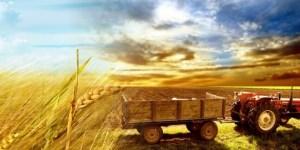 INTARF 2019- 8.INEGOL AGRICULTURE FAIR
