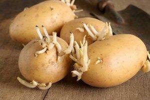 Photo of لا ترم البطاطا عند ظهور براعم عليها !!