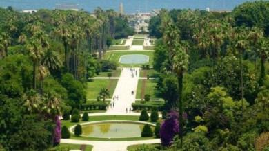 Photo of شاهد..ثالث أكبر حديقة بالعالم..عربية تسلق طرزان أغصانها