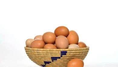 Photo of شركة تطلب موظفين براتب 10 دولارات وعلاوة 144 بيضة