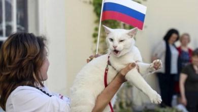 "Photo of القط الأصم.. ""عرّاف"" مونديال روسيا 2018"