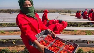 Photo of خلافا لنفي المغرب.. إسبانيا توقف أول متحرش بعاملات الفراولة